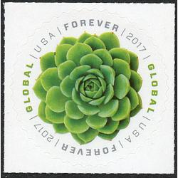 #5198 Green Succulent Global Forever, Echeveria Plant