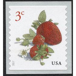 #5201 Strawberries, Coil